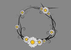 daisy ramowy wektora Obrazy Royalty Free