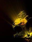 Daisy Rayflowers Royaltyfria Bilder