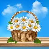Daisy Realistic Colored Composition. Wicker basket of flowers stands on a wooden bench vector illustration Stock Photography