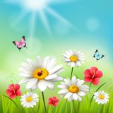 Daisy Realistic 3d Composition. Flowers in the sun with with butterflies and beetles vector illustration Royalty Free Stock Photos