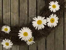 Daisy's on a branch wreath Royalty Free Stock Photography