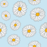 Daisy seamless Royalty Free Stock Photos