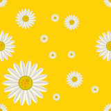 Daisy seamless pattern Stock Photos