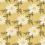 Daisy seamless pattern Stock Photography