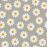 Daisy seamless pattern Stock Images