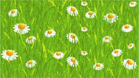Daisy. Seamless vector background Royalty Free Stock Image