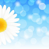 Daisy And Sky. Flower Daisy And Blue Sky, Vector Illustration Stock Photo