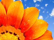 Daisy on sky Royalty Free Stock Images