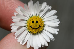 Daisy Smile. Closeup shot of white daisy flower with a smile stock images