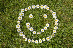 Daisy smile. In a green field Royalty Free Stock Image