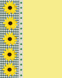 Daisy spring border green gingham Stock Photos