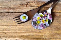Daisy Spring en una bifurcación Fotografía de archivo