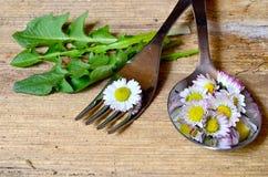 Daisy Spring en una bifurcación Foto de archivo libre de regalías