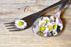 Daisy Spring en una bifurcación Imagenes de archivo
