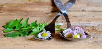 Daisy Spring en una bifurcación Imagen de archivo