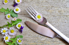 Daisy Spring en una bifurcación Fotos de archivo libres de regalías