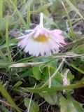 Daisy spring flower floral field grass green. Daisy spring flower  floral field grass green leaves stock photos