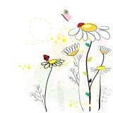 Daisy spring flowers background Stock Photos