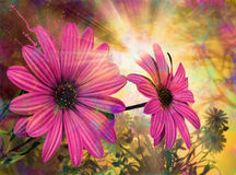 Daisy, spring sunrise flowers. Purple daisies between other flowers in forest at sunrise Royalty Free Stock Images