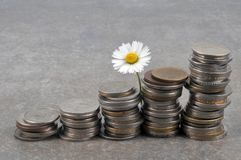 Daisy with stacks of coins stock images