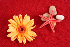 Daisy and starfish over four stones on the sand Stock Photography