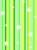 Daisy stripe. White daisies on green stripped background Royalty Free Stock Photography