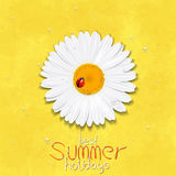 Daisy summer flower. Chamomile. Best Summer holidays Royalty Free Stock Photos