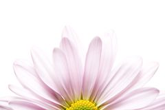 Daisy sunrise Stock Images