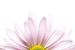 Daisy sunrise stock images