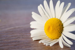 Daisy on the table at sunset. On the right Royalty Free Stock Image