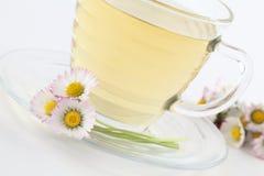 Daisy tea royalty free stock photography