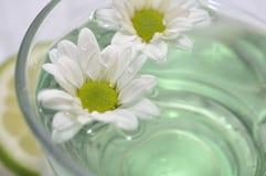 Daisy tea Stock Photo