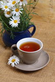 Daisy tea Royalty Free Stock Photo