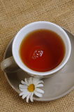 Daisy tea Stock Image