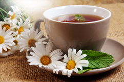 Daisy tea Royalty Free Stock Image