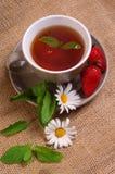 Daisy tea Royalty Free Stock Photos