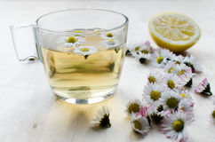 Daisy tea Stock Images