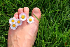 Daisy Toes. Daisies between the toes and green grass under the foot Royalty Free Stock Image