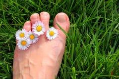 Daisy Toes Royalty Free Stock Image