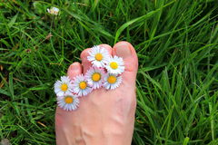 Daisy Toes. Daisies between the toes and green grass under the foot Stock Images