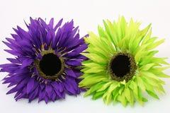 Daisy twee kleur Stock Afbeeldingen