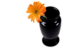 Daisy and Vase Royalty Free Stock Images
