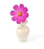 Daisy in a vase Stock Photo