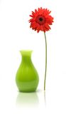 Daisy beside vase. Still-life of a daisy standing outside of it's vase stock image