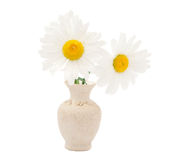 Daisy in a vase Royalty Free Stock Photography