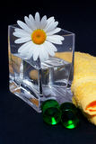 Daisy in the vase and bath pearls Royalty Free Stock Images
