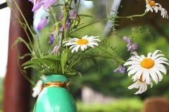 Daisy in vase Royalty Free Stock Photography