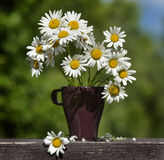 Daisy in a vase Stock Image