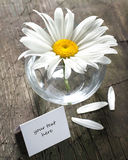 Daisy in the vase and paper card Royalty Free Stock Image