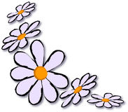 Daisy vector Royalty Free Stock Image